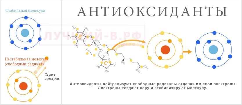 живая вода антиоксиданты польза